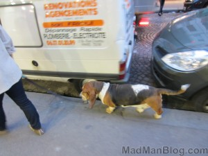 Basset Hound in Paris :)